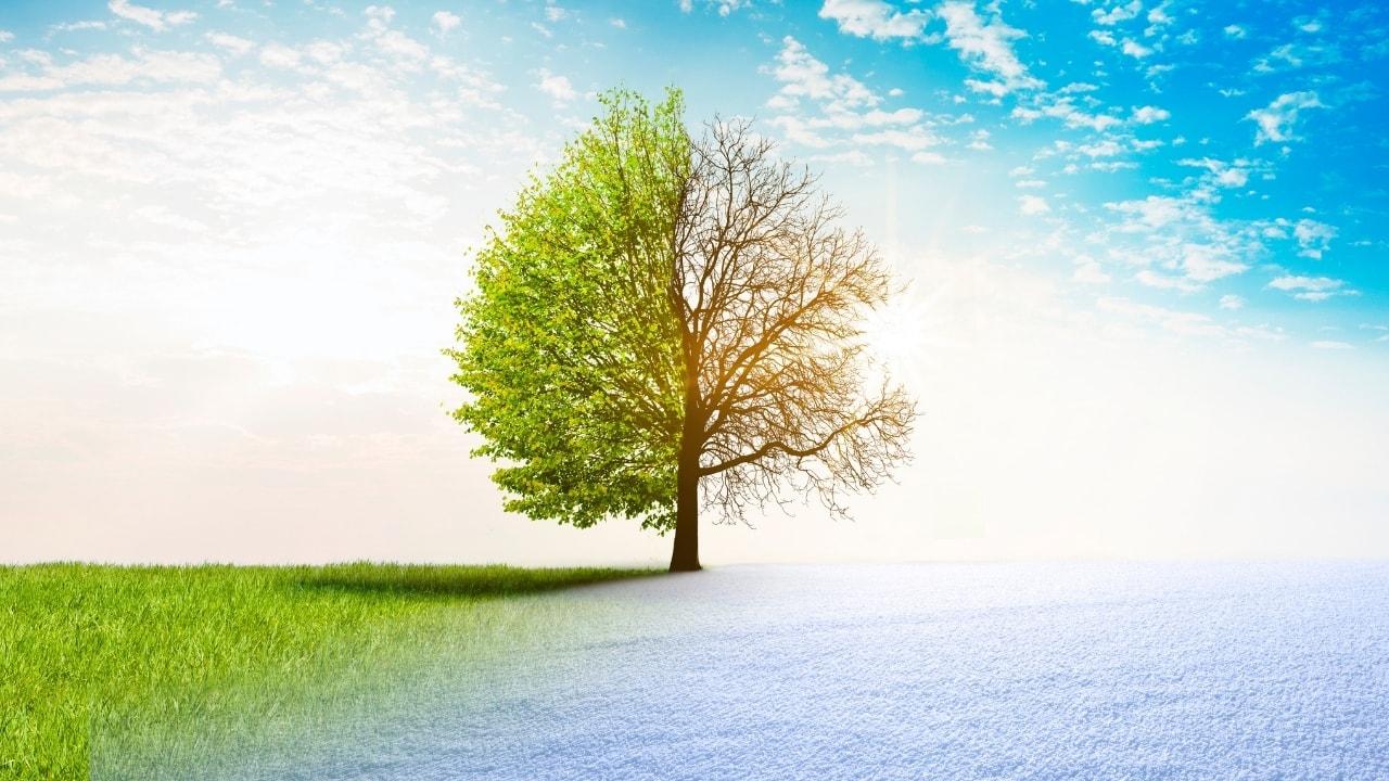 キレイな木の画像